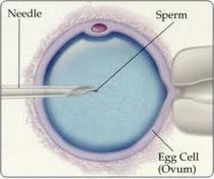 chto-polezno-dlya-spermatozoidov